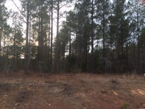 buying land in Moore County